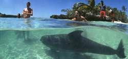 Honduras Delfin