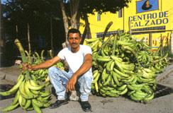 Banana Honduras