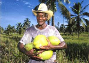 Coconut Man Honduras